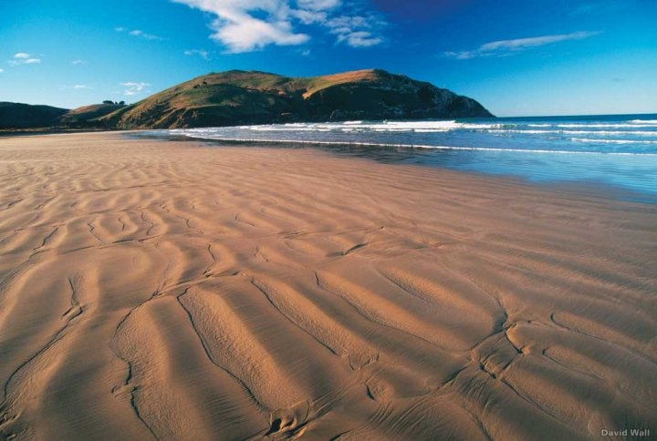 Cannibal Bay, Catlins. Photograph by David Wall