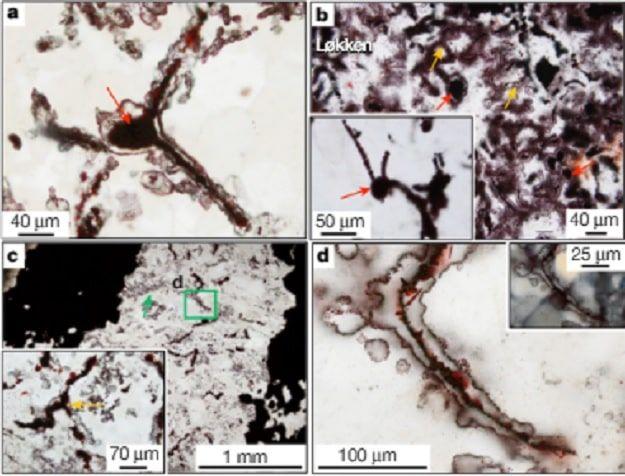 Hallan evidencia más antigua de vida en la Tierra: data de hace al menos 3.770 millones de años   N+1: artículos científicos, noticias de ciencia, cosmos, gadgets, tecnología