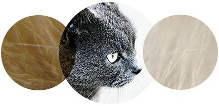 La clinique Allergie privée Avant garde Médical vous propose un traitement pour guérir l'allergie au chat.