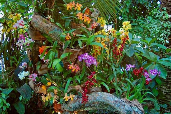 Flower Garden Ideas Pinterest Photograph Orchids Garden