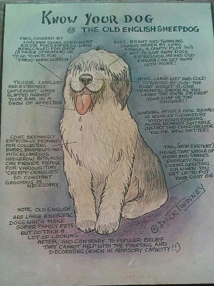 Pin By Betsy Rogers On Old English Sheepdogs Old English Sheepdog English Sheepdog Sheepdog