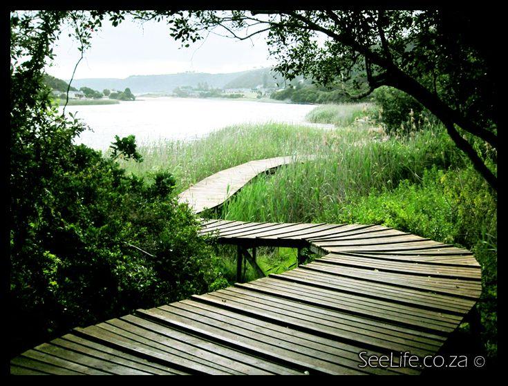 wilderness boardwalk south africa