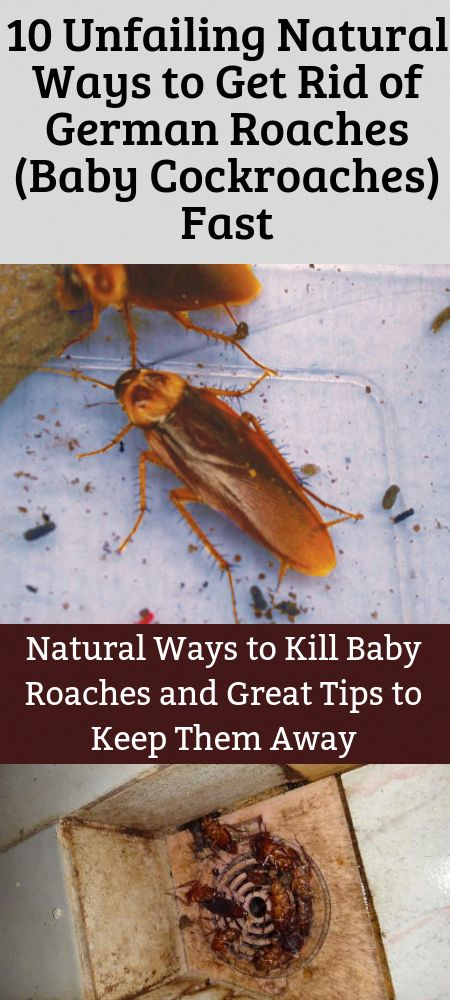 How to get rid of roaches naturally? Especially of baby ...
