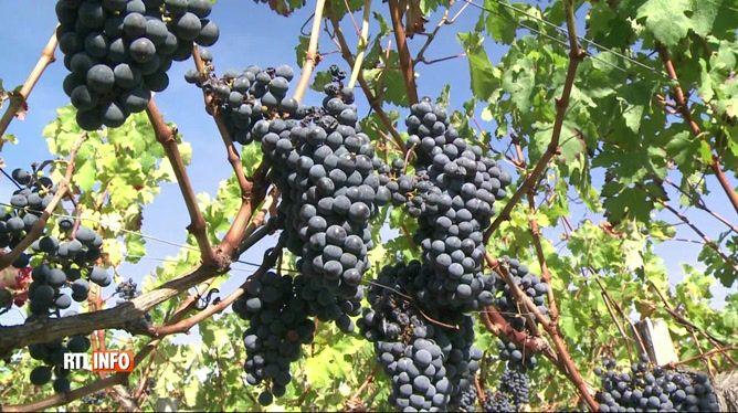 """Le vin bio, une nouvelle tendance qui prend de l'ampleur: """"Il n'y a pas de production de grands vins sans prise de risque"""""""