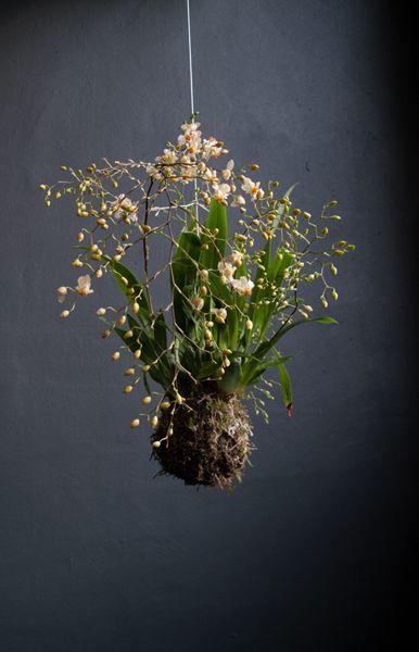 Love this Idea-String Gardening