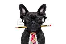 Afbeeldingsresultaat voor franse bulldog gek