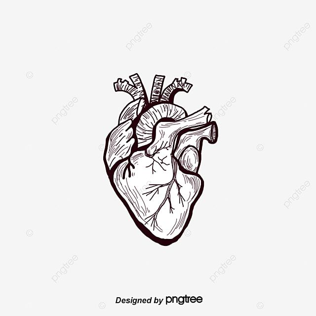 Fig Painted Black Heart Heart Human Body Organ Png Transparent Clipart Image And Psd File For Free Download Black Heart Human Body Black Backgrounds