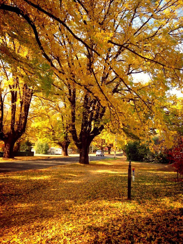 Bright in Victoria
