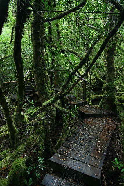 Creepy crawly track in the Great Wilderness of Tasmania, Australia (by Eddy.H).: