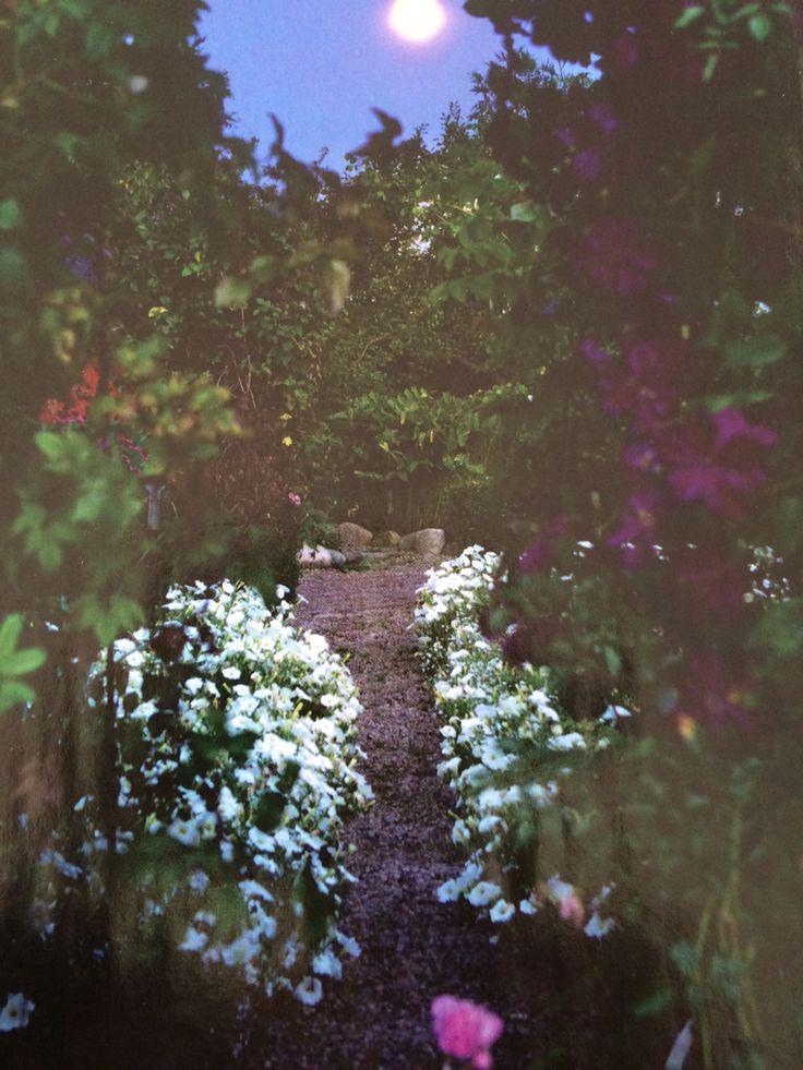 Petunior på natten i trädgårdslandet