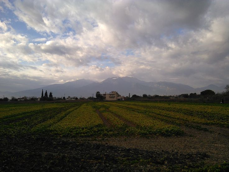 #MountOlympus (#MontOlympe), morning, Nov. 23, 2015, Peristasi, Pieria, Northern #Greece