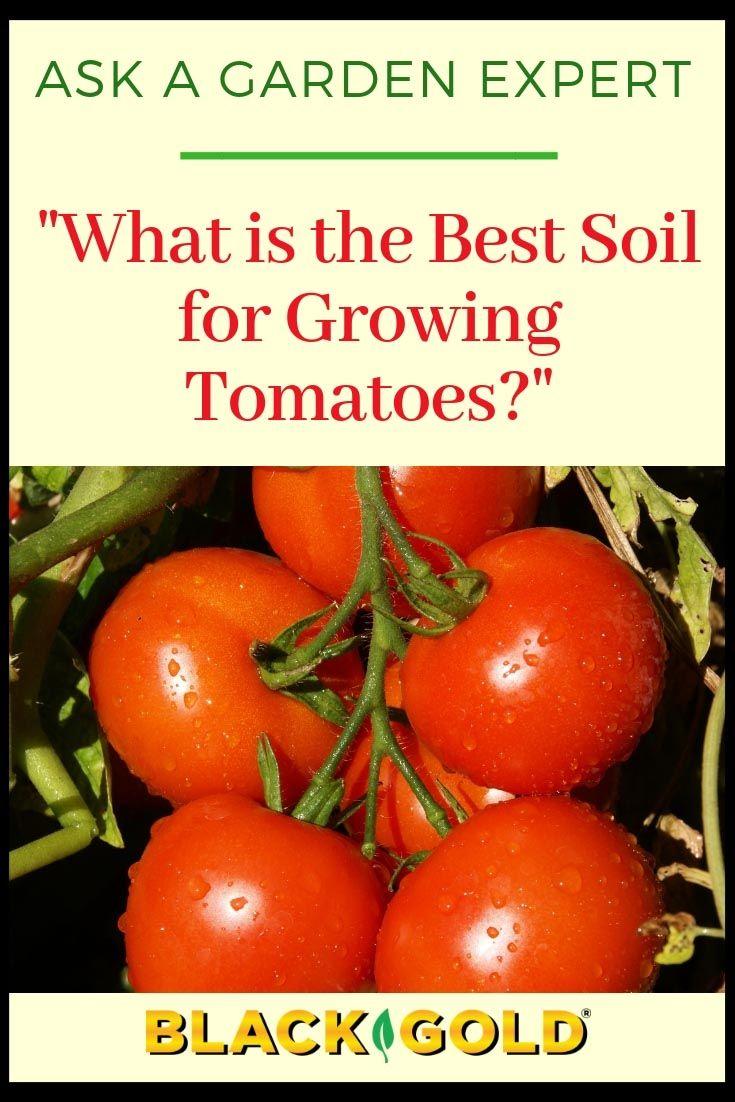 What Is The Best Soil For Growing Tomatoes Growing Tomatoes