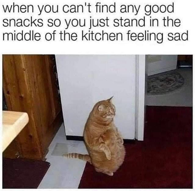 Meme S Quotes Memes Its Memes Laughing Memes Memes Quotes Funnie Memes I Meme Truthful Memes Happy Meme W Super Funny Memes Fun Snacks Funny Cat Memes