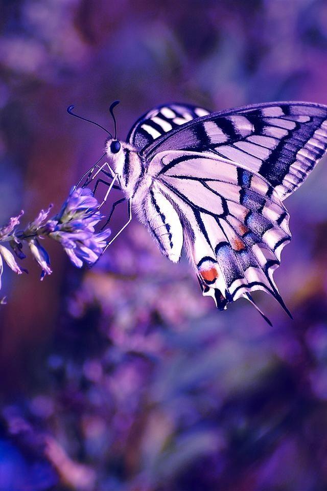 ♔ purple butterfly