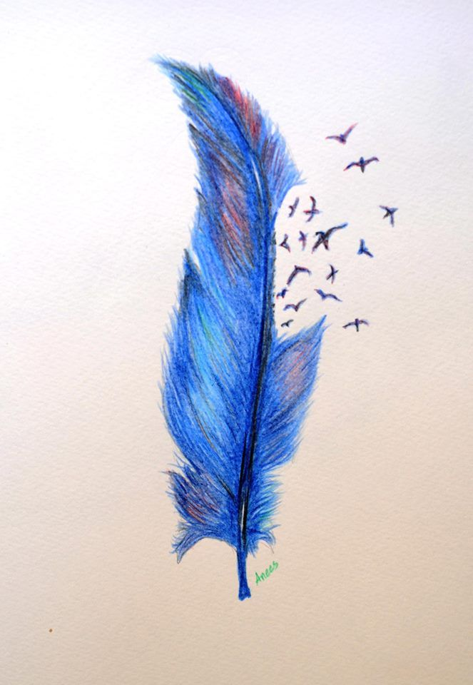 Color pencil sketch pencil sketching quill feather colour pencil drawing