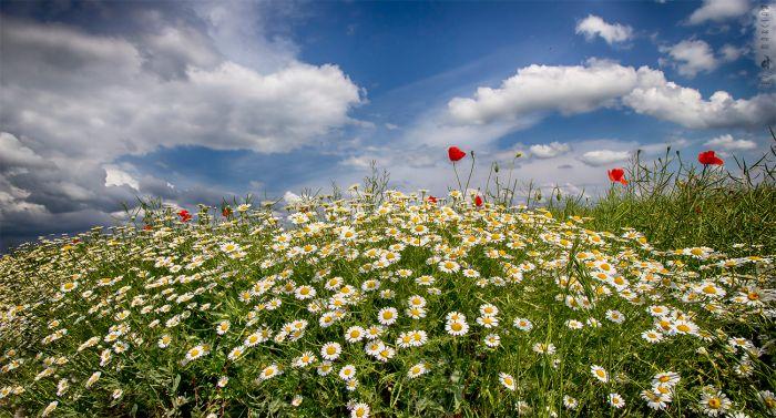 Igazi tavasz - Természet - Nincs adat - Nincs adat