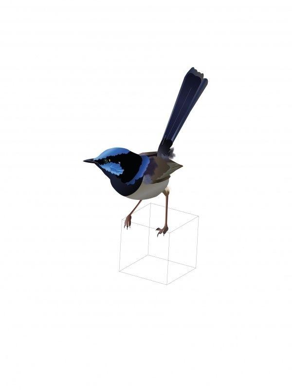 Vogel A5 De illustratie kan worden opgehangen of neergezet als klein kunstwerkje. Geef hem cadeau of maak er iemand anders blij mee via de post! Blanco achterkant met de naam van de vogel erop vermeld. A5 formaat, geleverd incl. envelop. Illustratie: Roosmarijn Knijnenburg.  Ornaaltelfje |  het mannetje is in het broedseizoen opvallend fraai blauw gekleurd op het voorhoofd,  de oorstreek, rug en de staart.  Zo trots als een pauw palmt hij de vrouwtjes in.