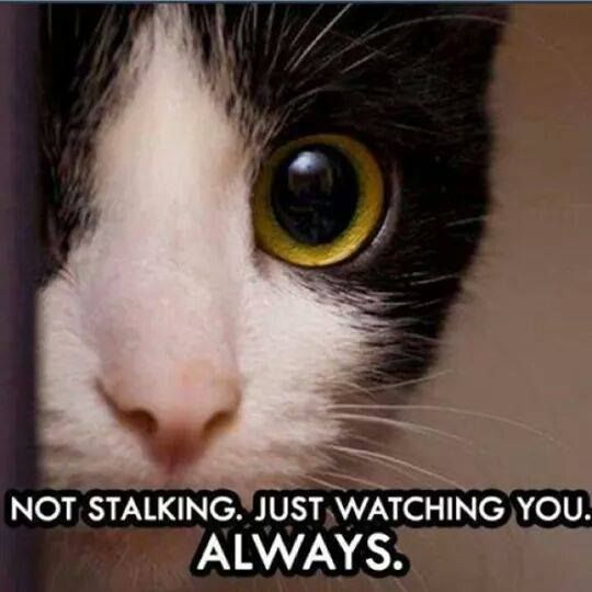 Stalker Kitty not stalking. Nuh-uh. You just need supervision.
