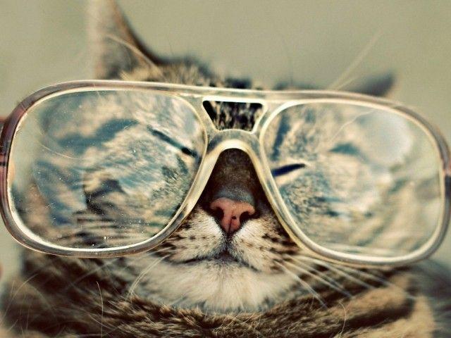 Funny Cat Wallpaper HD