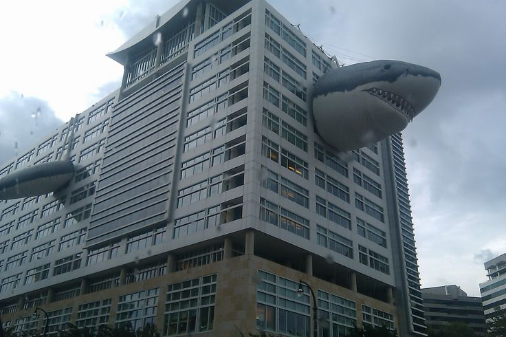 The Office of Discovery Channel has a inflatable shark. | See More Pictures
