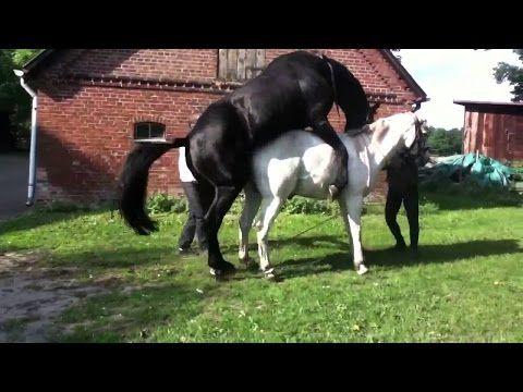 Animals Mating - Funny Animals Videos - Wild Animals HD