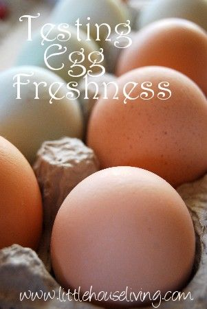 How to tell if an egg is still fresh.