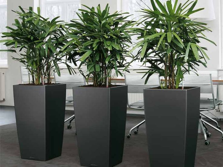 office pot plants. plants in office space google search pot e