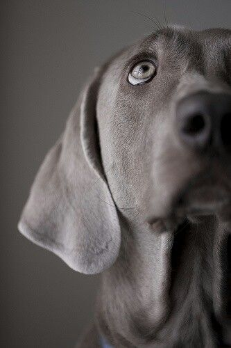 I wonder what goes through his mind when he sees us peeing in his water bowl.  ~ Penny Ward Moser