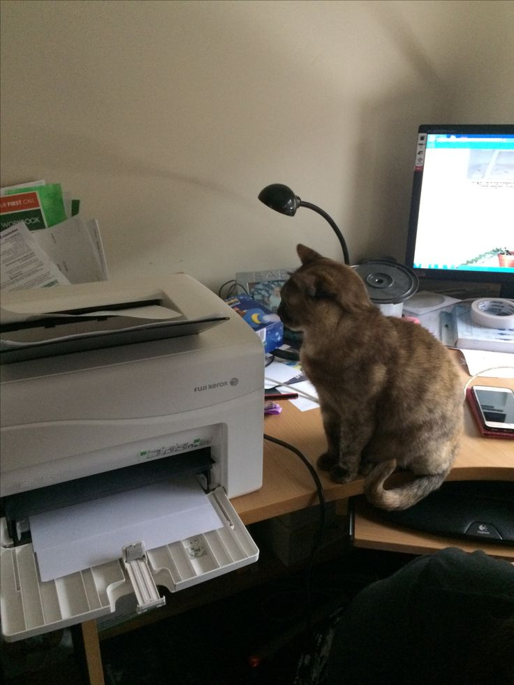 Cat is wondering what the printer is doing
