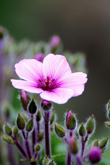 ~~purple flower bokeh by hkfioregiallo~~