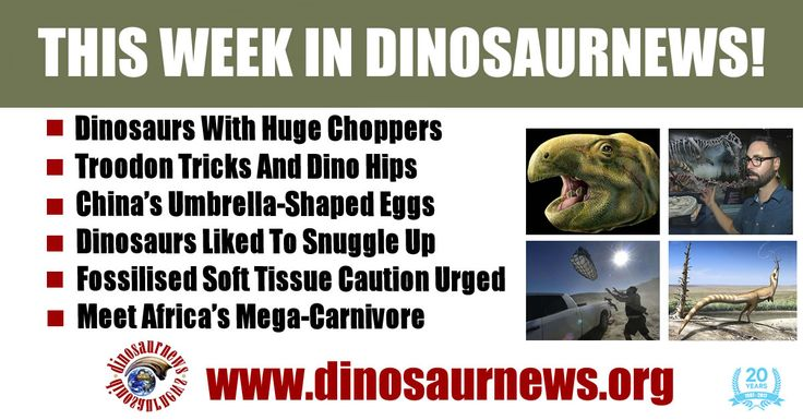 This Week - Dinosaur With Huge Choppers * Troodon Tricks And Dino Hips * Umbrella-Shaped Eggs * Dinosaurs Liked To Snuggle Up * Fossilised Soft Tissue Caution * Africa's Mega-Carnivore http://www.dinosaurnews.org #dinosaurs #news #fossils #dinosaurnews