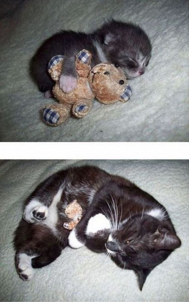 Exhibit C: A kitten with a bear who later grew up into a cat with a bear. | Can You Make It Through This Post Without Squealing? THIS IS SO STINKING CUTE