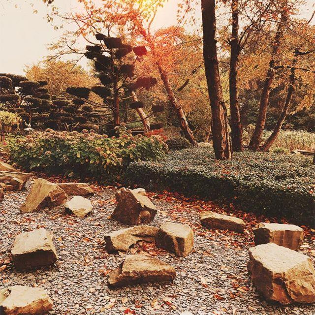 Golden days in the Amsterdam Japanese garden ✨ . . . . . #amsterdamcity #amsterdaminstagram #amstergram #igersholland #igersamsterdam #igersnetherlands #igersnederland #gramthedam #amsterdamview #amsterdamworld #amsterdamshots #amsterdamlove #amstelpark #japanesegarden #natureart #naturepics #naturelife #naturephotos #awakethelight #autumnleaves #autumnvibes #fallvibes #simplebeyondblog #ilove_simplebeyond #amomentofwonder #photosinbetween #goldenlight #colorfulworld