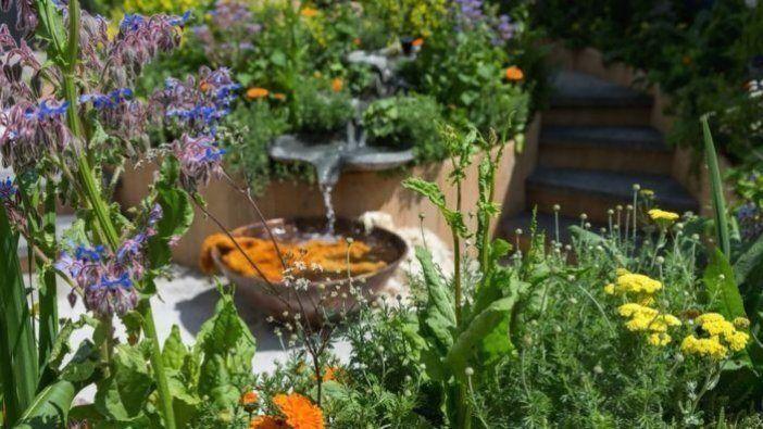 Brunnen Garten Original Bilden Eine Massive Wartungsfreie Wilden Blumen Im Garten En 2020 Massif Fleurs Parterre De Fleurs Fontaine De Jardin