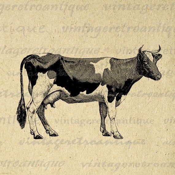 Digital Graphic Farm Cow Printable Image Animal Artwork
