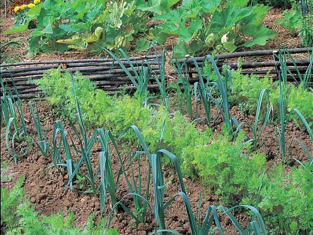 Comment mettre en place la rotation des cultures au potager et faire des mariages de plantes utiles aux légumes ? Les explications des experts du jardin de R...