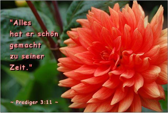 """Prediger3:11...""""Alles hat er schön gemacht zu seiner Zeit."""" Ecclesiastes 3:11...""""He has made everything beautiful in its time."""""""