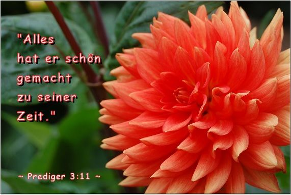 "Prediger3:11...""Alles hat er schön gemacht zu seiner Zeit."" Ecclesiastes 3:11...""He has made everything beautiful in its time."""