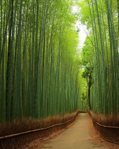 竹林の道 - 嵯峨野 / Bamboo Street - Sagano, Japan