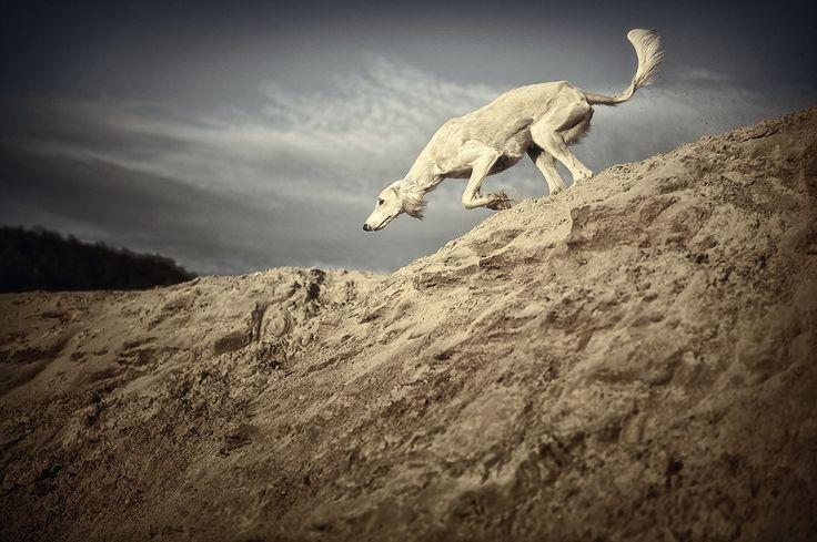 sanddune hunt... by Alyat on DeviantArt