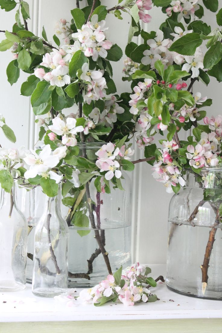 1654 best çiçekler images on pinterest plants flowers and