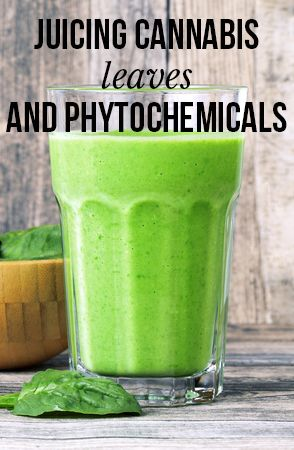 Juicing cannabis leaves and phytochemicals | massroots.com