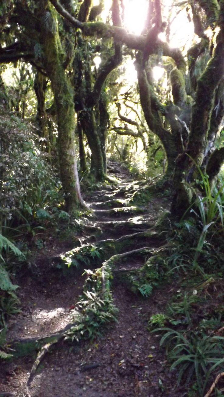 https://flic.kr/p/KLVxJ1 | Gnarley Path | Waingongoro Track