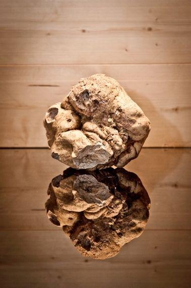 White truffle - tartufo bianco, a Piemontese specialty