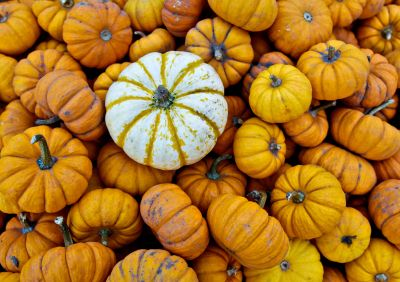 "HowStuffWorks ""Pumpkin Patch Pictures"""