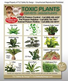 ba14ad68df980efc9dc2f6ff0f9248b0 - Plants That Repel Dogs From Gardens