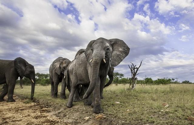 Elephants - marlon du toit