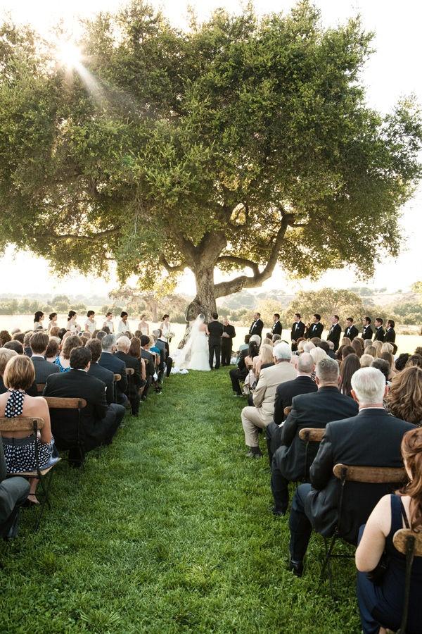 Best 10+ Willow tree