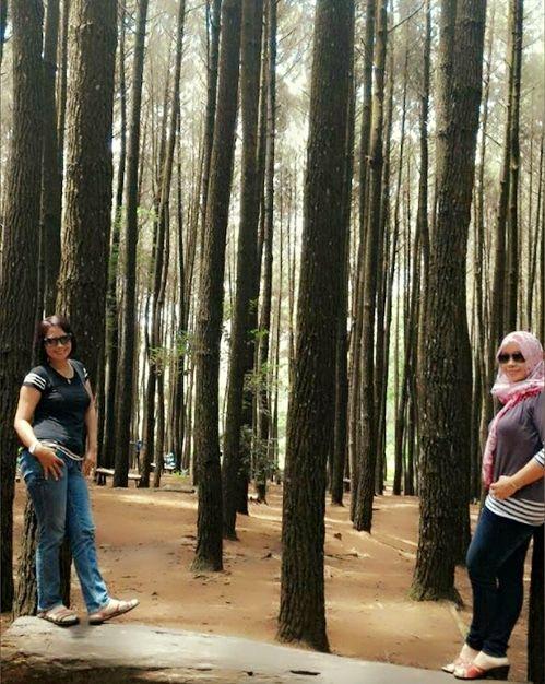 Menikmati Ketenangan di Hutan Pinus Imogiri