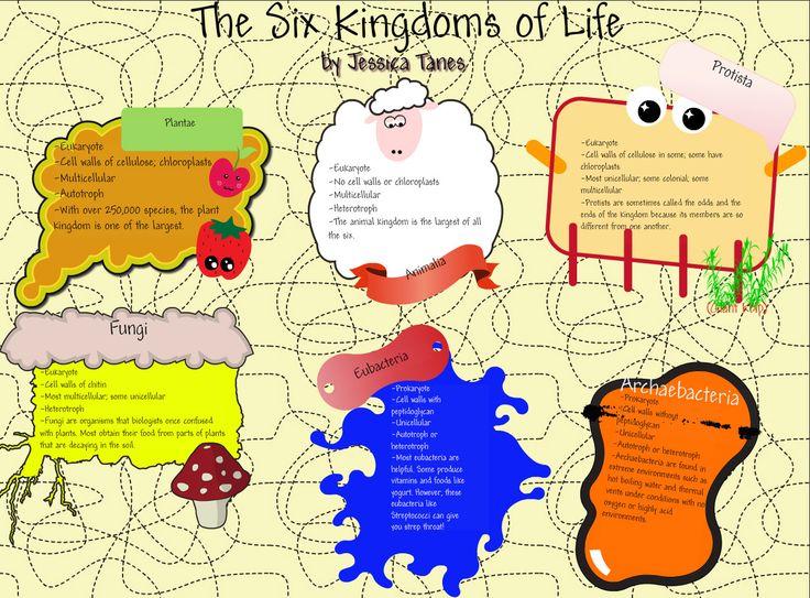 Classification worksheet biology